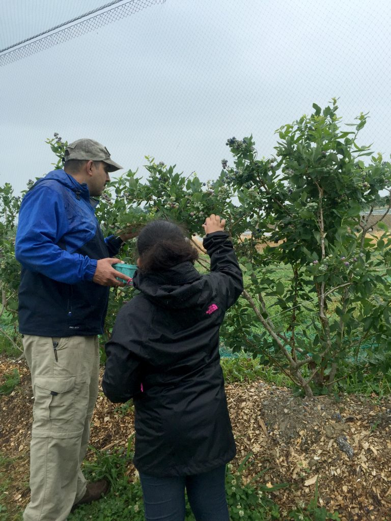 visiting-ochs-orchard-fruit-picking