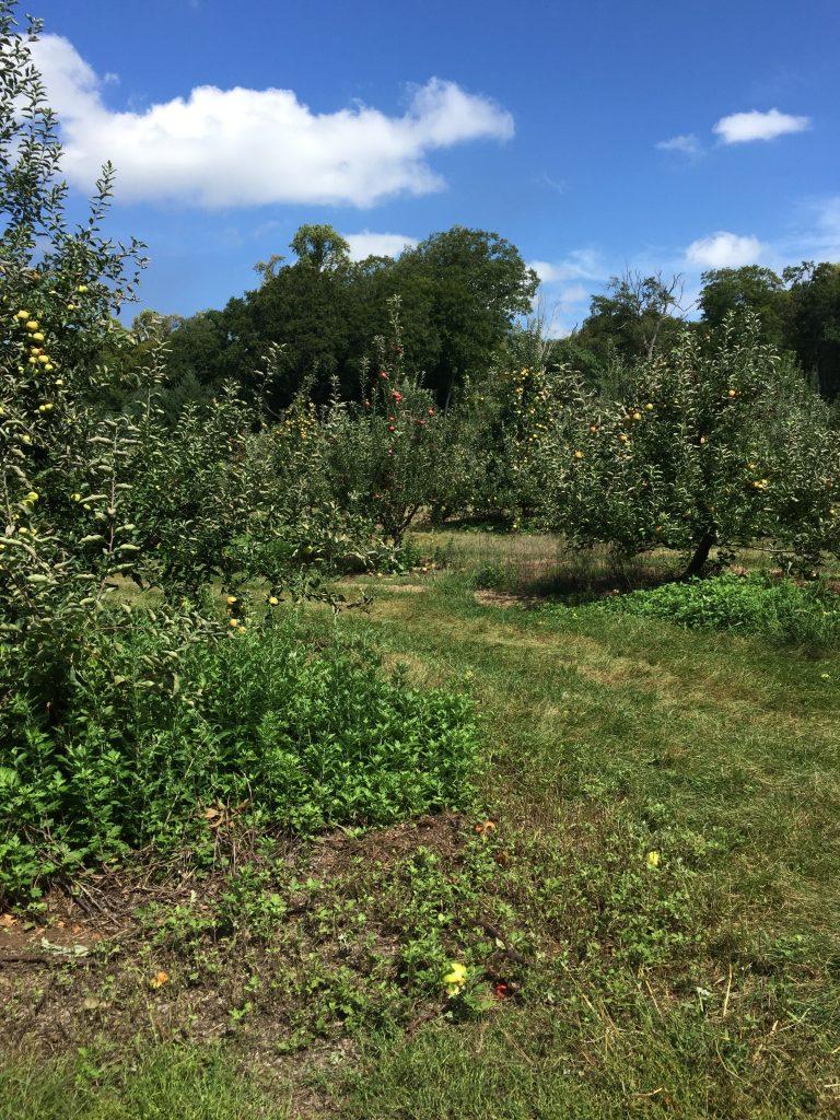 Apple field