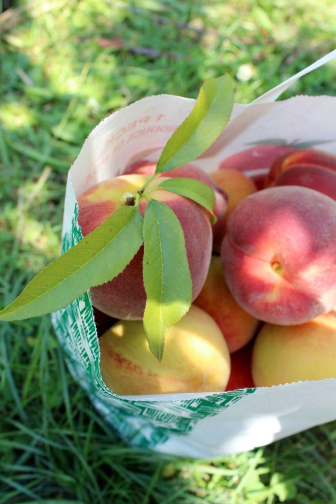 peaches in a bag