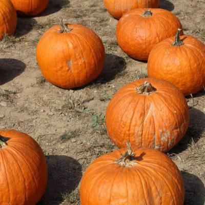Autumn has begun…and apple picking season too!